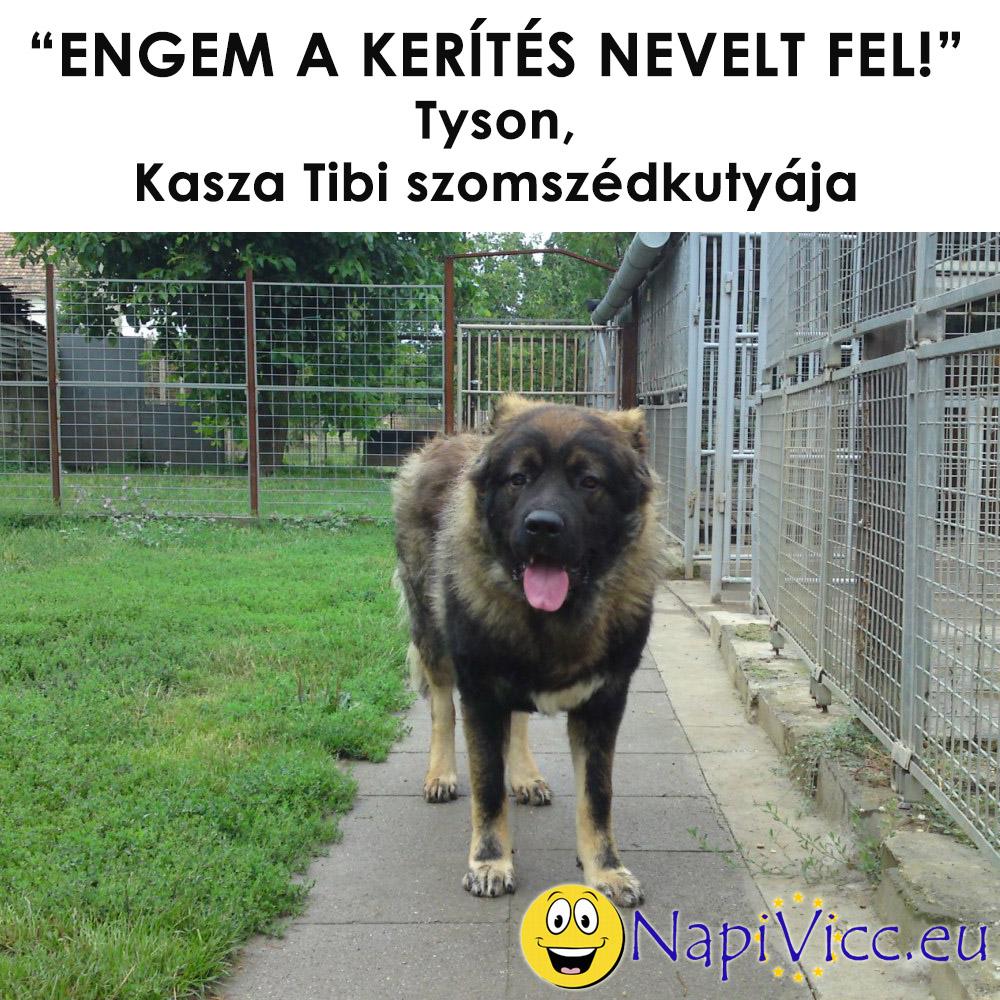kaszatibi3